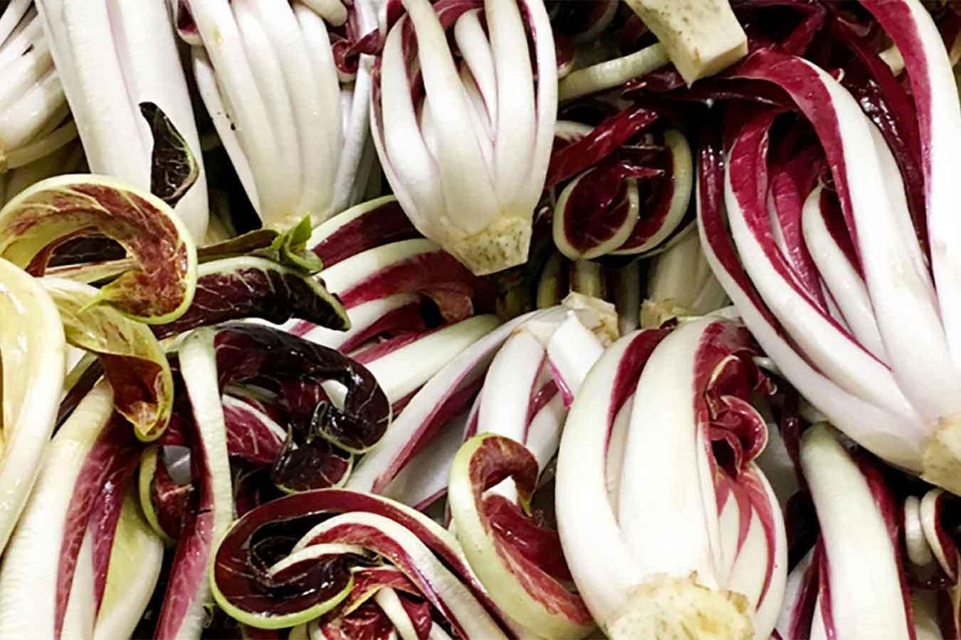 Il fiore d'inverno: il radicchio rosso di Treviso